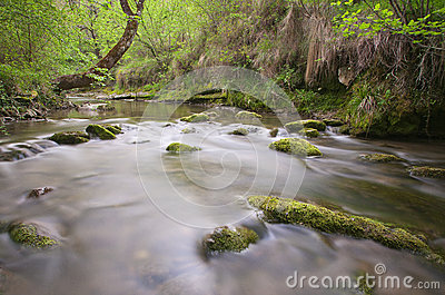 River in forest and green trees