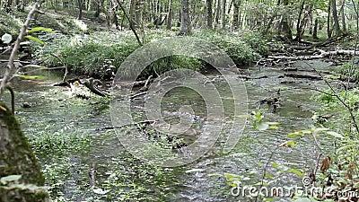 River in the forest in Nabran Azerbaijan stock video