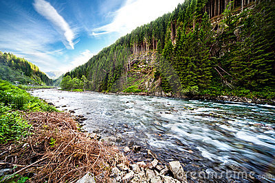 River Through Green Forest Royalty Free Stock Images - Image: 21472489