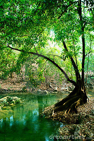 Free River In Deep Forest Royalty Free Stock Photos - 8659488