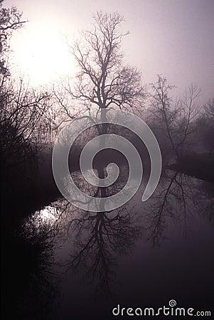 River mole in surrey