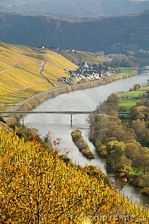 River Mosel Vineyards