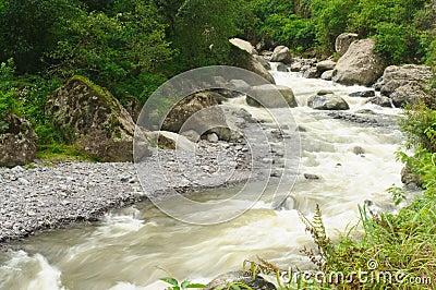 River in Rainforest