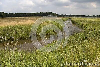 River Reest in Avereest