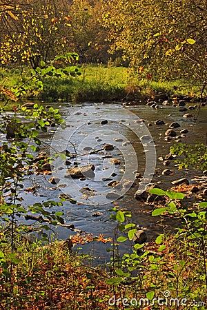 River running through the Autumn forest
