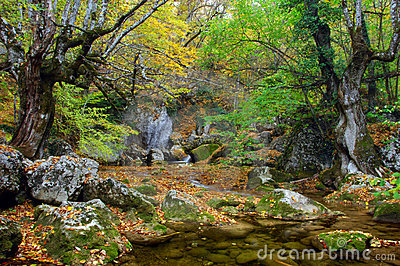 River stream in high mountain in autumn