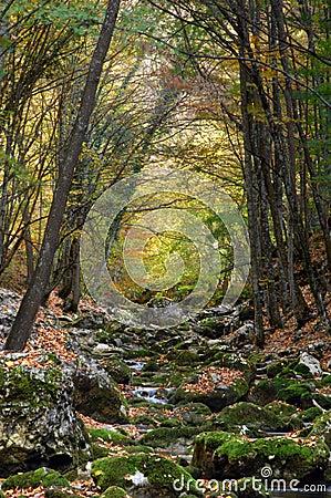 River stream in high mountain in autumn