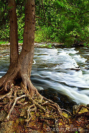Free River Through Woods Stock Image - 8077261