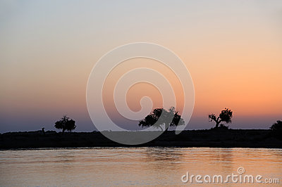 River and tree in dawn