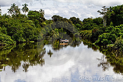 River in tropical jungle