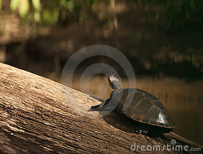 River Turtle and Butterfly: two friends