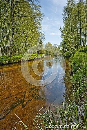 River Vltava in the national park Sumava, Europe