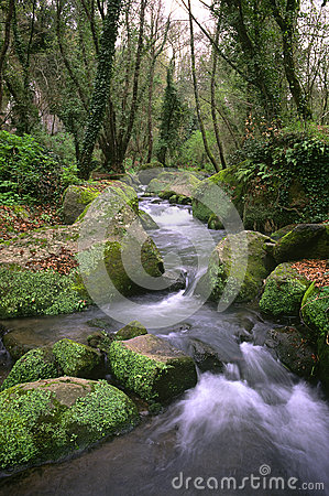 The river in the woods