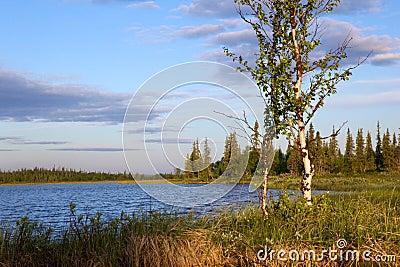 Riverside and birch