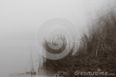 Riverside at foggy morning