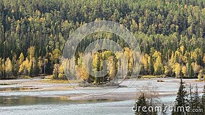 Riverside forest in Kanas