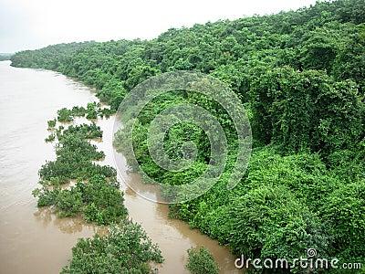 Riverside Greenery