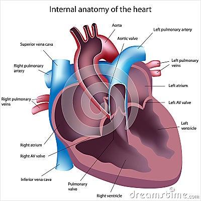 Rżnięty serce