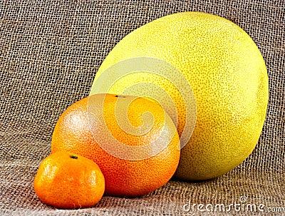Różnorodna cytrus owoc