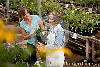 Roślina domowy zakupy