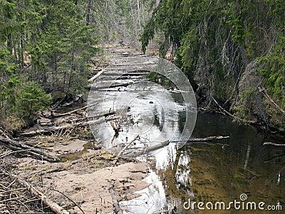 Río en bosque