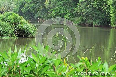 Río y árboles