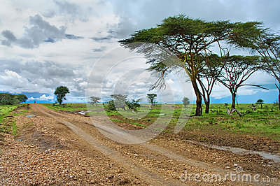 road in the African savannah