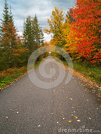 Road through autumn forest