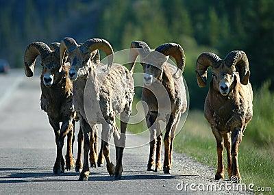 Road Bandits