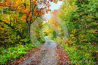 Path in colorful fall forest