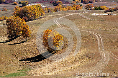 Road and birch trees in upland field