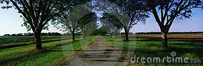 Road into Boone Hall Plantation, SC