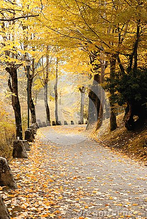 Road covered by yellow leaves