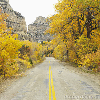 Free Road Cutting Through Aspen Trees. Royalty Free Stock Photography - 2042337