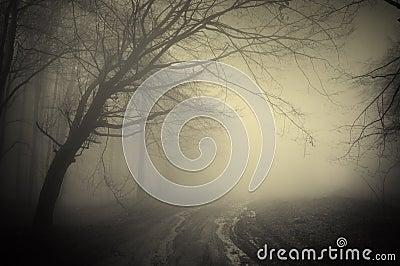 Road through a dark forest
