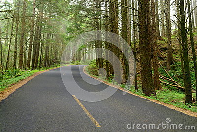 Road in the deep forest