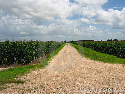 Road dissappearing into corn field