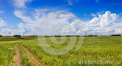 Road in a field with green grass