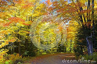 Road Foliage