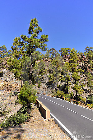 Road in the forest of Tenerife