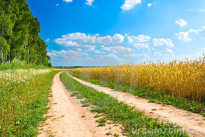 Road between forest and yellow field of wheat