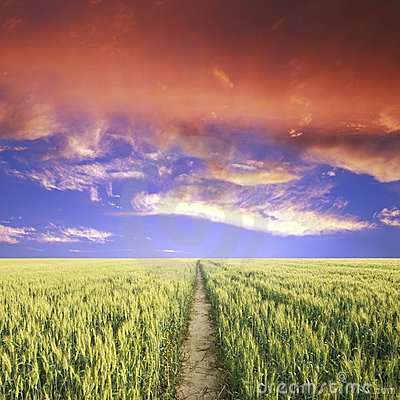 Free Road Hrough The Green Field Royalty Free Stock Photo - 14884245