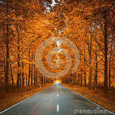 Free Road In Autumn Woods Stock Photography - 74917542