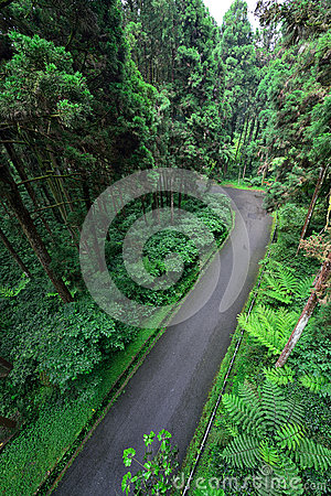 Free Road Inside The Forest Royalty Free Stock Photo - 51931835