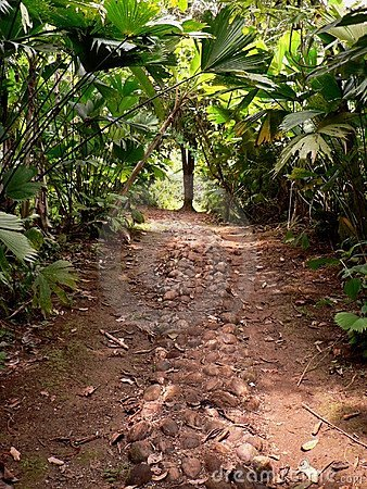 Road through the jungle, panama