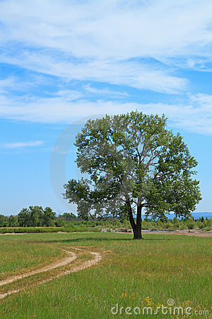 Road and lone tree