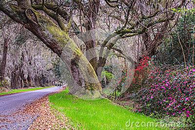 Road Into Magnolia Plantation South Carolina