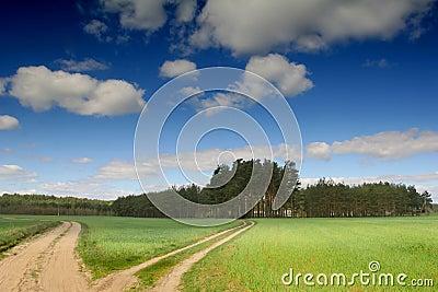 Road between meadows