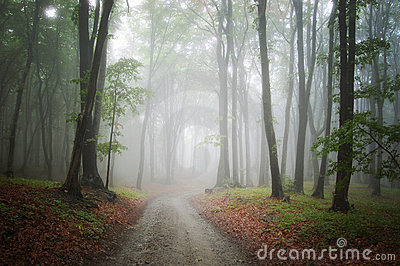 Road in a mysterious fantasy foggy forest