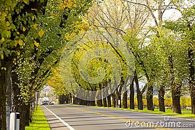 Road in Napa